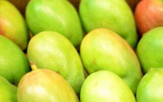 El Mango es una de las frutas más queridas de los países tropicales.