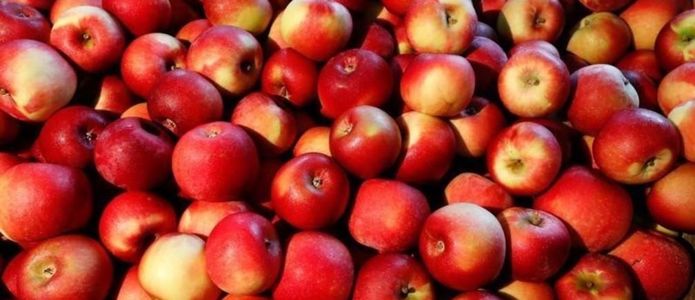 curiosidades de la manzana